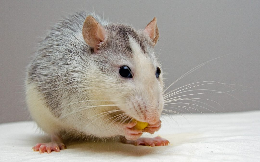 Lived experience in evaluation: We're not lab rats